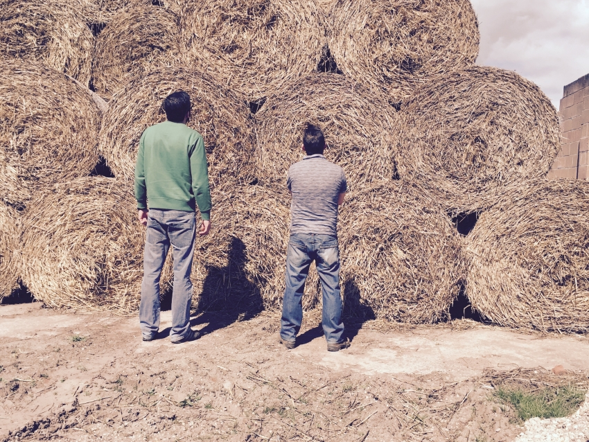 Weighing up the job!!  Hay Mountain